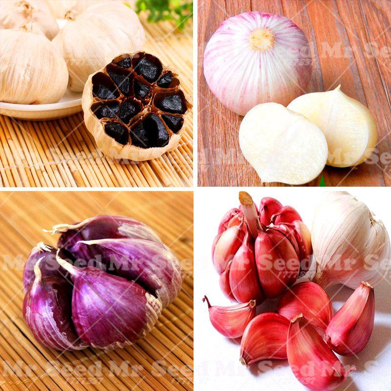 100 Stücke Knoblauch Samen Bio Samen Gemüse Küche Gewürz Lebensmittel  Bonsai Ist Ein Gemüsepflanze Hat Krebs