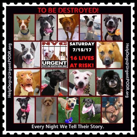 To Be Destroyed 07 15 17 Info To Rescue A Death Row Dog Please Read This Http Information Urgentpodr Org Adoptio Best Dogs For Families Nyc Dogs Dogs