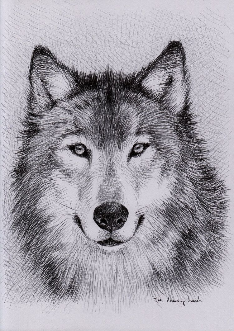 Pin by that bass on art in 2019 wolf painting wolf sketch wolf