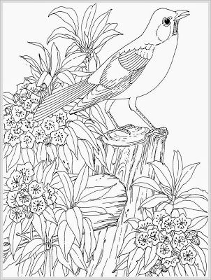 Robin Bird Coloring Pages For Adult Bird Coloring Pages Animal