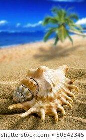 big shell on the beach