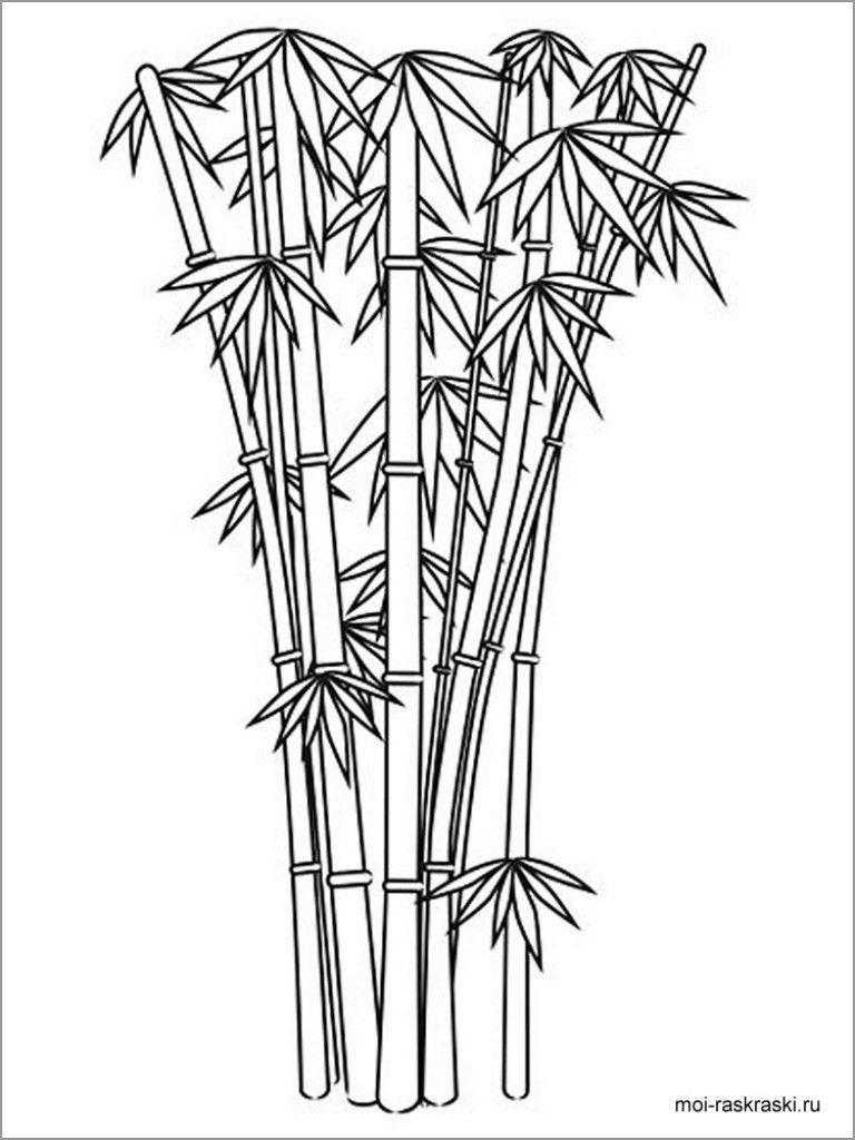 Bamboo Tree Coloring Pages Tree Coloring Page Coloring Pages Bamboo Tree