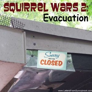 Squirrel Wars 2: Evacuation. The (often humorous) attempts we have made to remove squirrels from our attic.