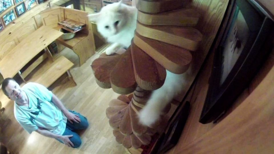 Best Spiral Staircase For Cats Google Search Catification 400 x 300