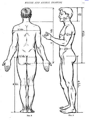 proportion of the human body, Proportion, Principles of Design