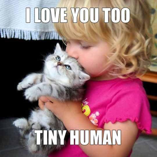 Super Funny Animals Cute Animals Cute Baby Animals Kittens Cutest