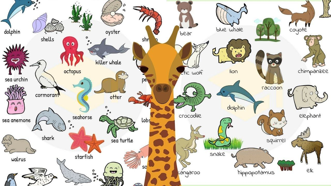 Animal Names in English Learn Animal Vocabulary