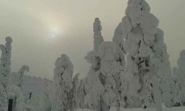 Lumiset puut ja pieni auringon pilkähdys