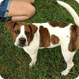 Adopted Alex Urgent Miami County Animal Shelter In Troy
