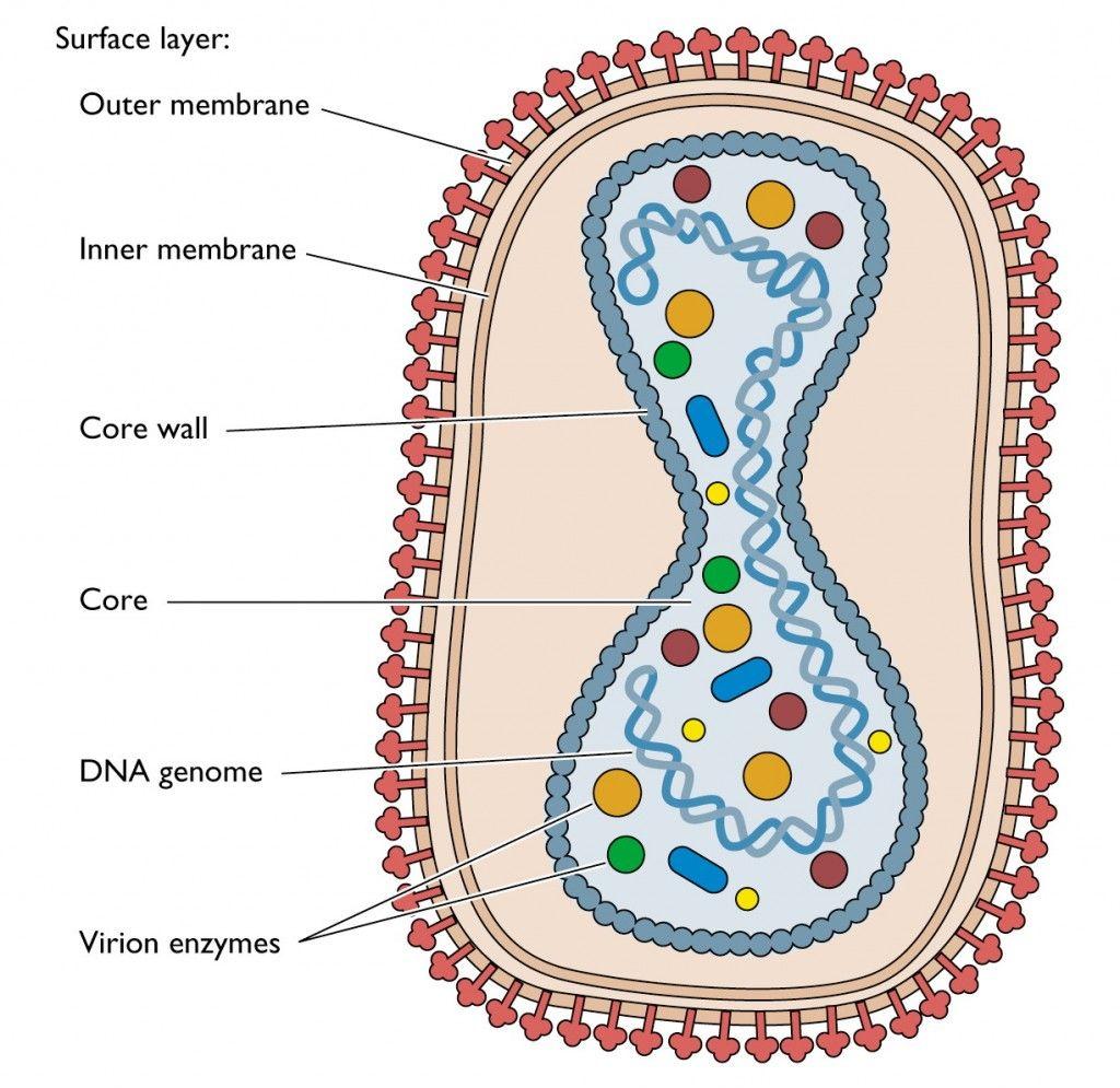 Pin On Viruses