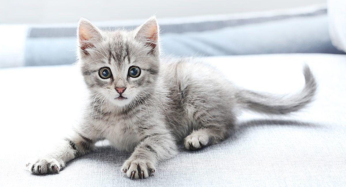 Pin On Kitten Names