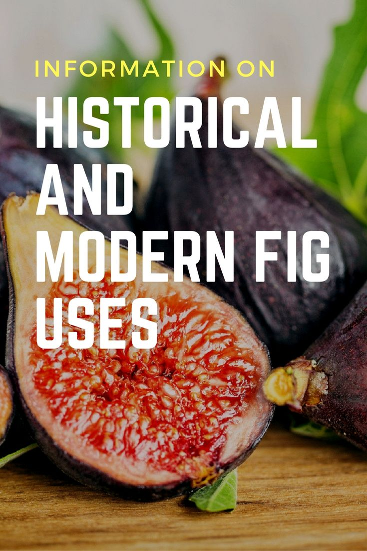 Information On Historical And Modern Fig Uses - Gardening Know How's Blog