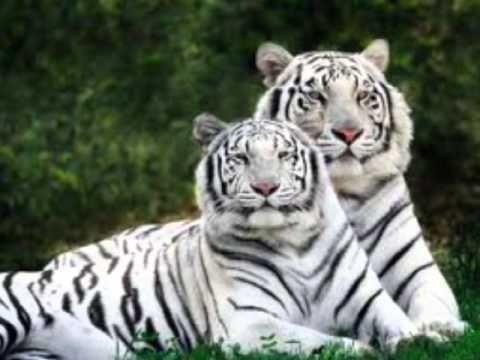o animal mais lindo do mundo - Pesquisa Google