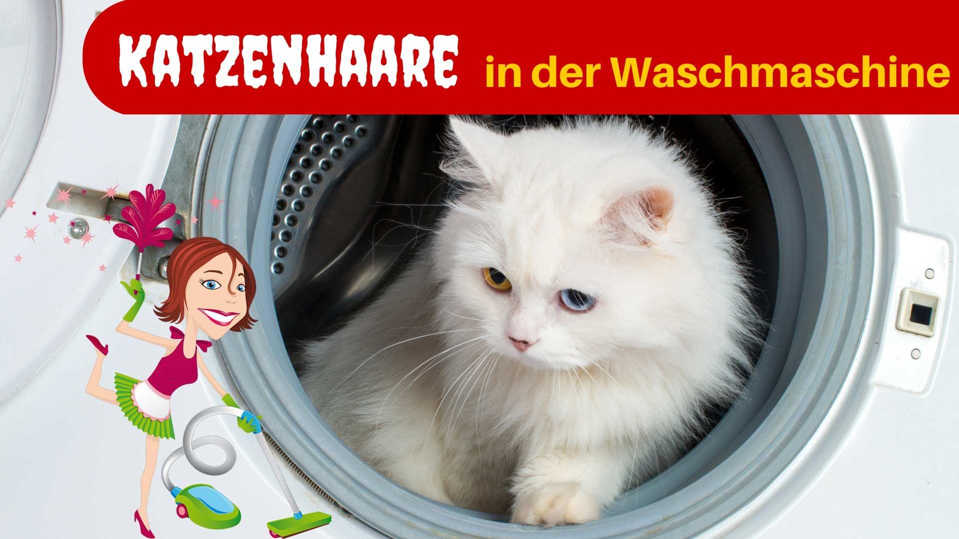 Tierhaare entfernen 8 Tipps für Hund & Katze   Haushaltsfee.org ...