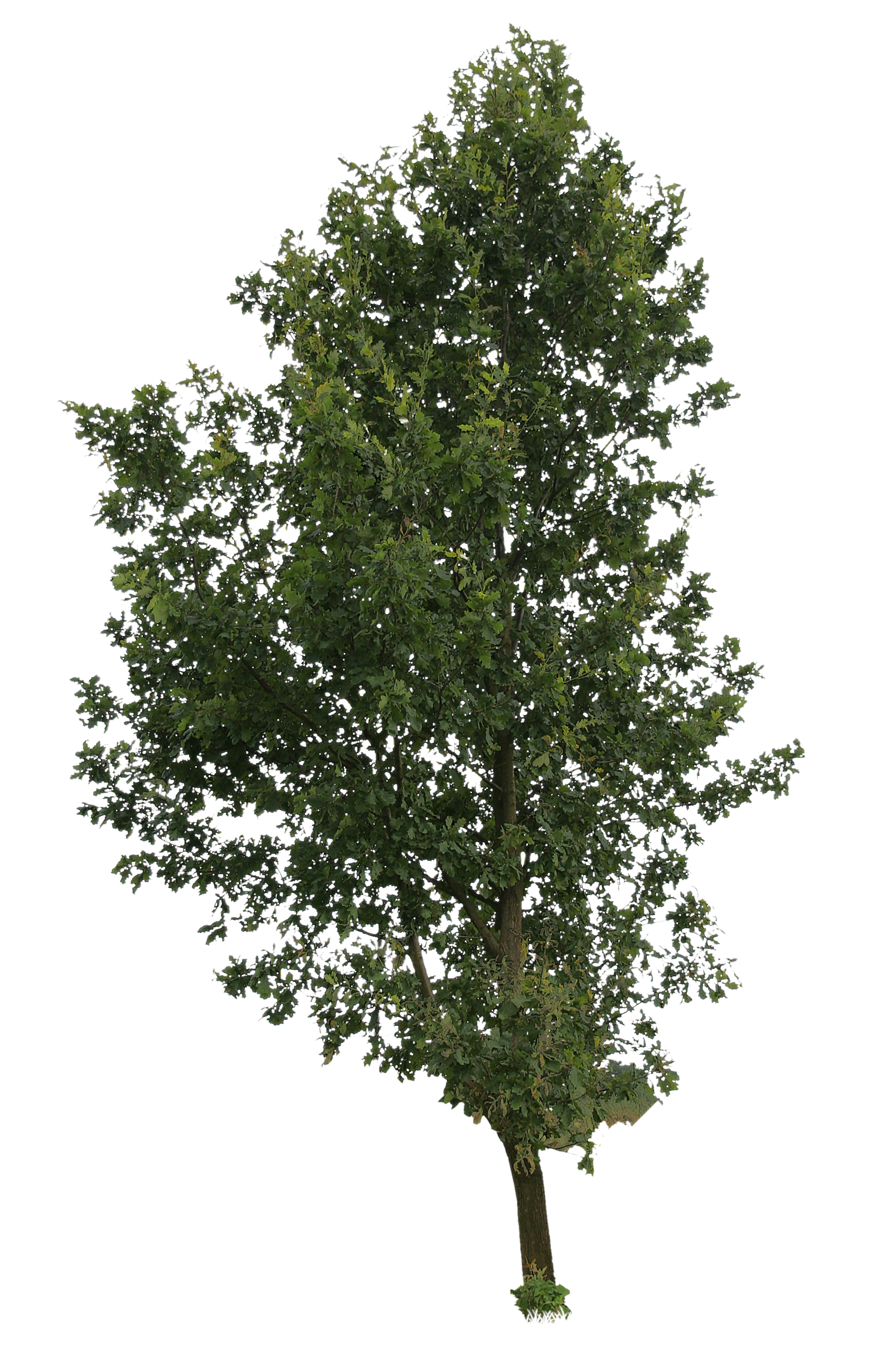 High tree | Free Cut Out people, trees and leaves | Trees ...