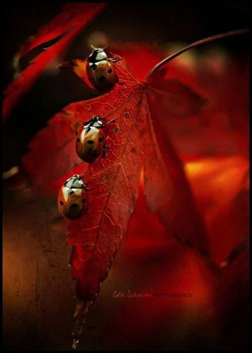 Ladybugs all in a row!