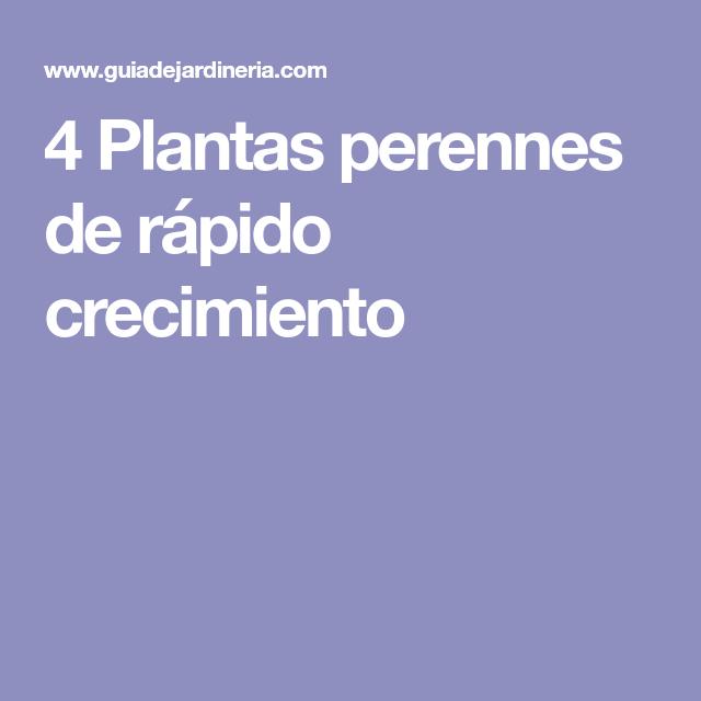 4 plantas perennes de r pido crecimiento jardines for Arboles perennes de crecimiento rapido