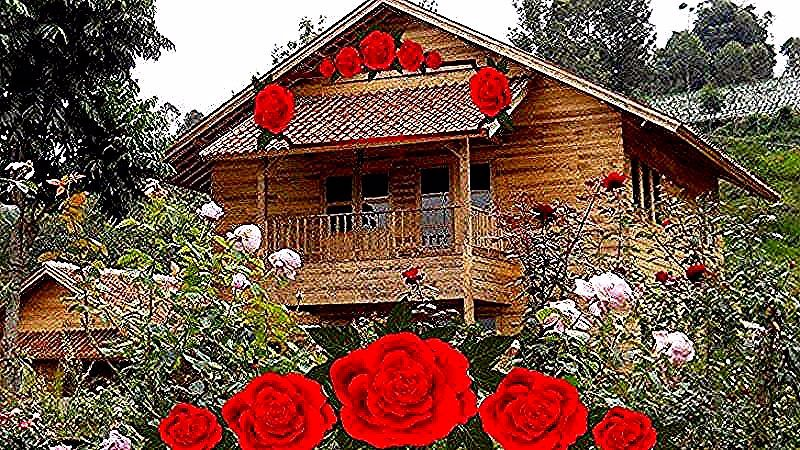 Kebun Yang Ditanami Dengan Bunga Adalah
