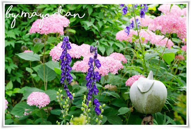 Sommergarten Sommergarten Garten Pflanzen