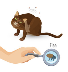 Get Rid From All Types Of Paracites In Pets In 2020 Pets Petco Rid