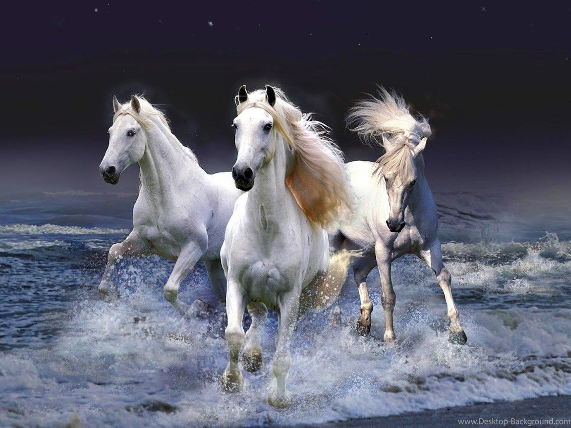 30 Seven Horses Wallpaper Gif Download Hd Wallpapers For Free On Unsplash Tons Of Awesome Seven Horses Wallpaper In 2021 White Horse Painting Horses Horses Wallpaper