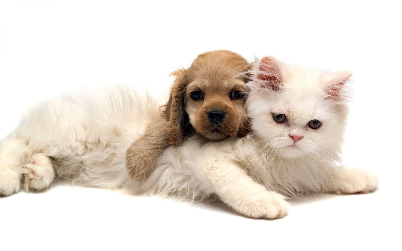 HD Cute Cat Wallpapers For Your Desktop