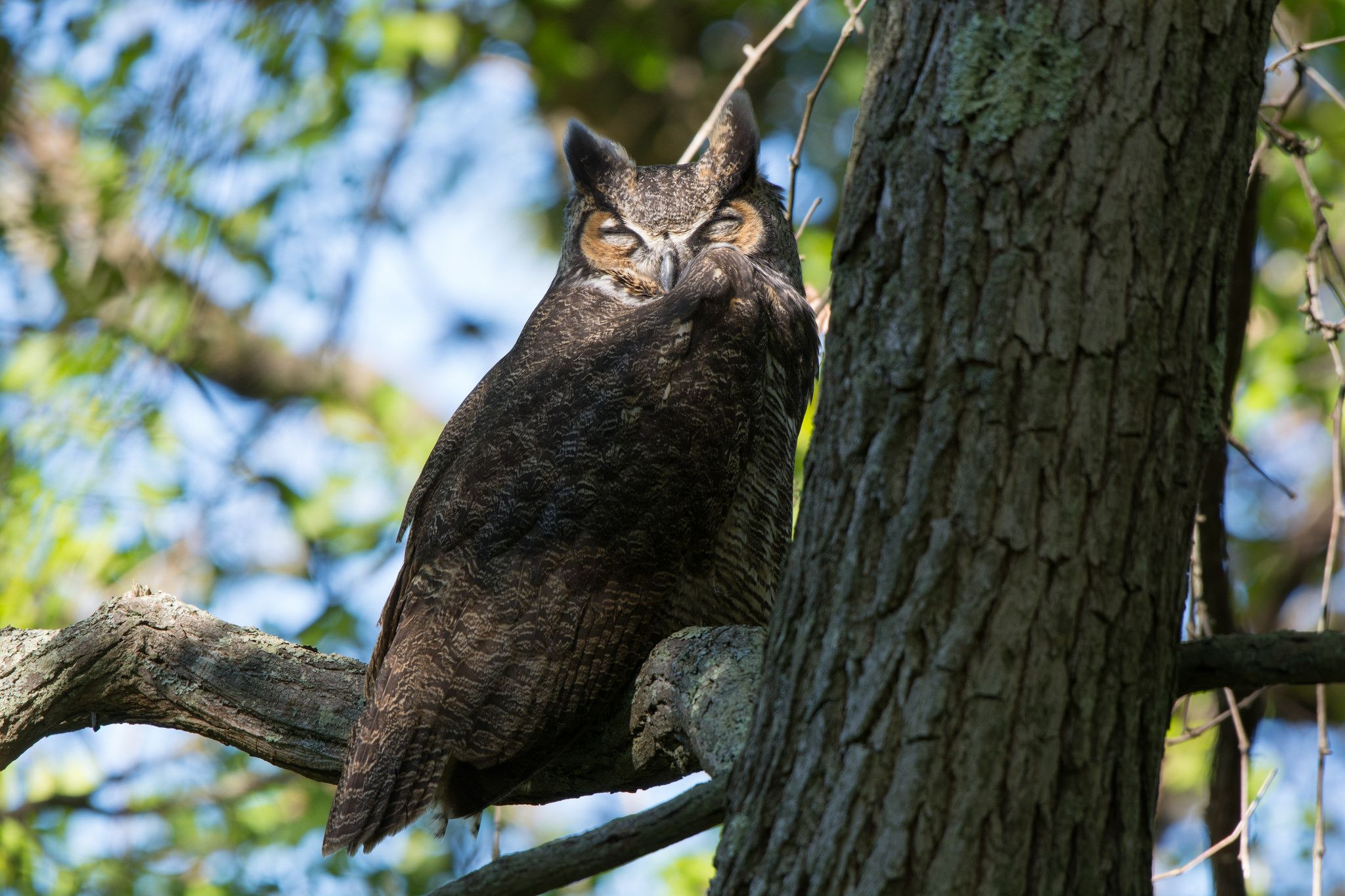 """https://flic.kr/p/N5uVWF 