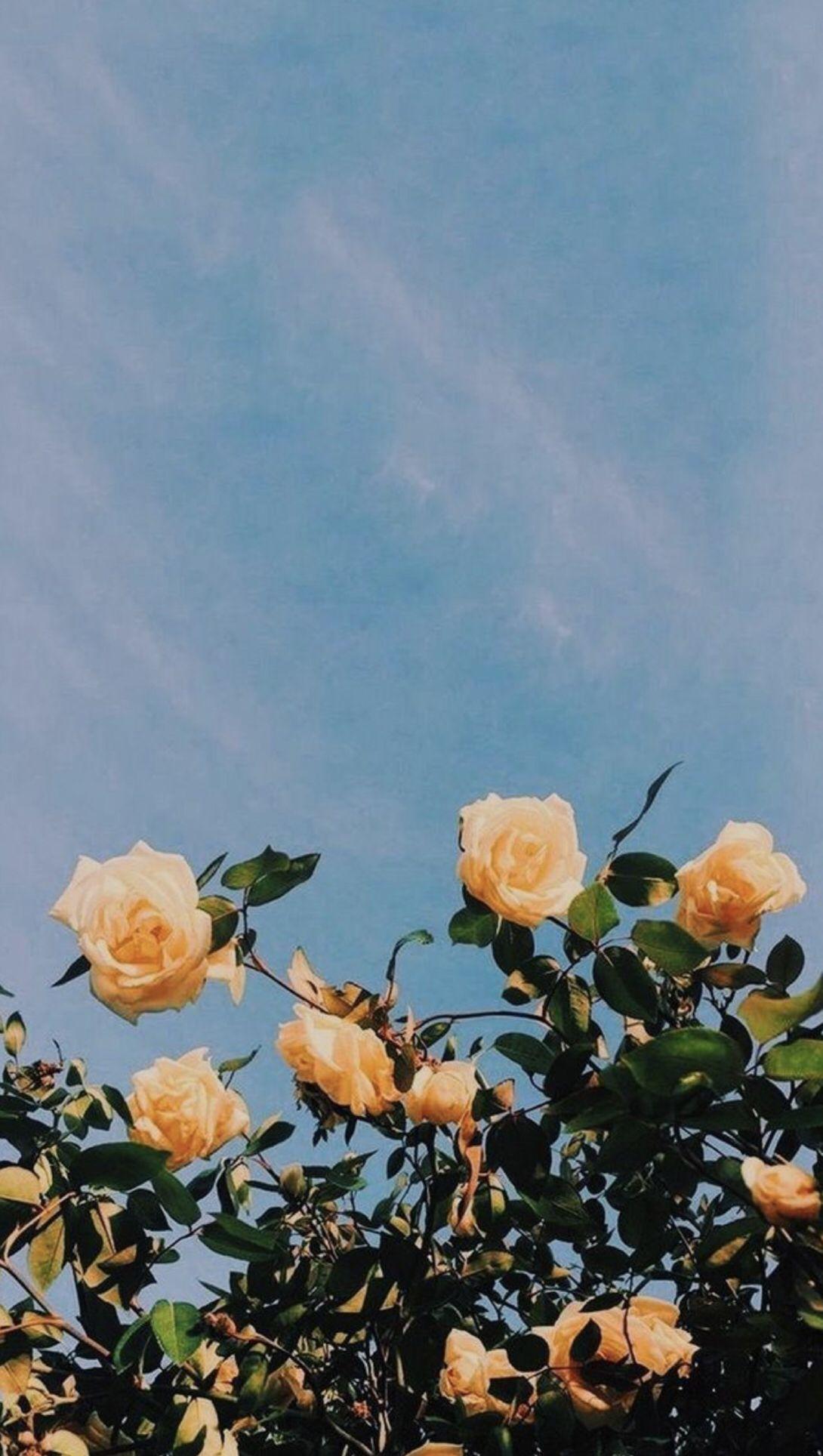 Pinterest // limas_diary # Frühlingsblumen #Feder #Hintergrund # Frühling # hinter ... #backrounds