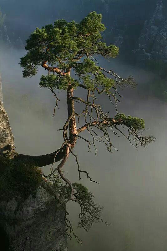 Pin Von Thomas Richter Auf Trees Mit Bildern Baum Fotografie Naturbilder Bilder