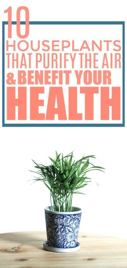 10 Houseplants That Are Actually Good for Your Health