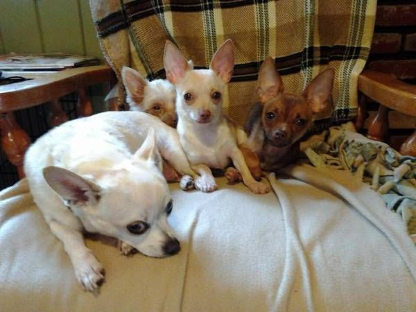 HUGE Adoption Event with Heaven Sent Animal Rescue on ...