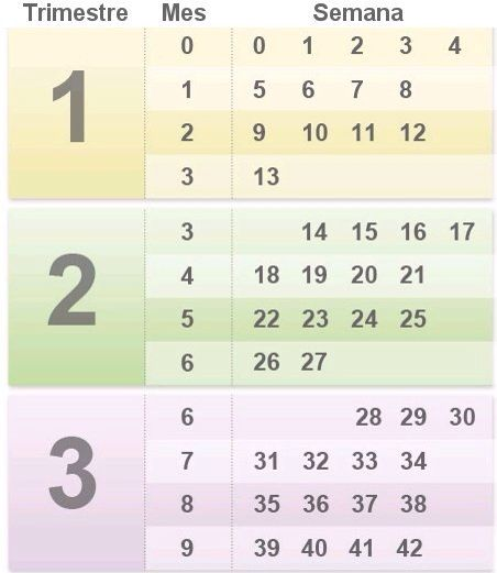 How to count months and weeks during pregnancy also guide for men your best survival funnies rh pinterest