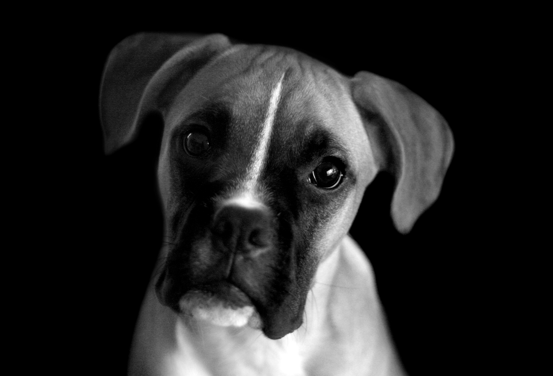 sad black dog wallpapers