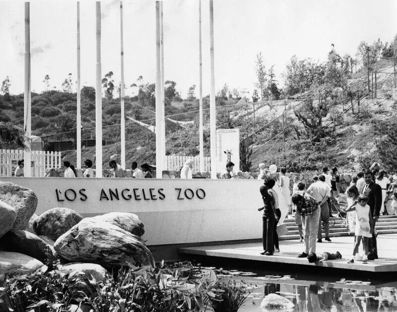 I Liked It Better This Way Reminds Me Of Three S Company Los Angeles Zoo Vintage Los Angeles Zoo Photos