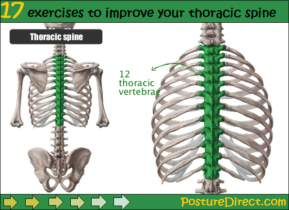 your thoracic spine plays one of the most vital roles in maintaining