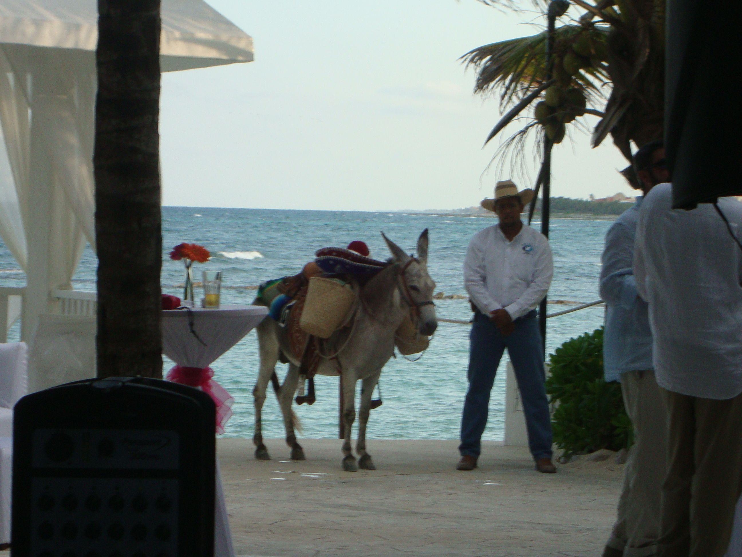 El Dorado Seaside Suites All Inclusive Adults Only Resort Riviera ...