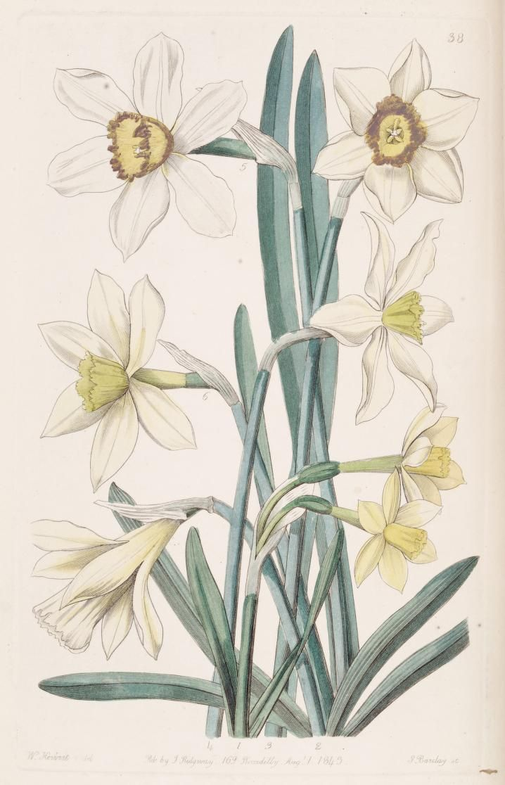 Pin by gosia fedele on botanical art and illustrations pinterest