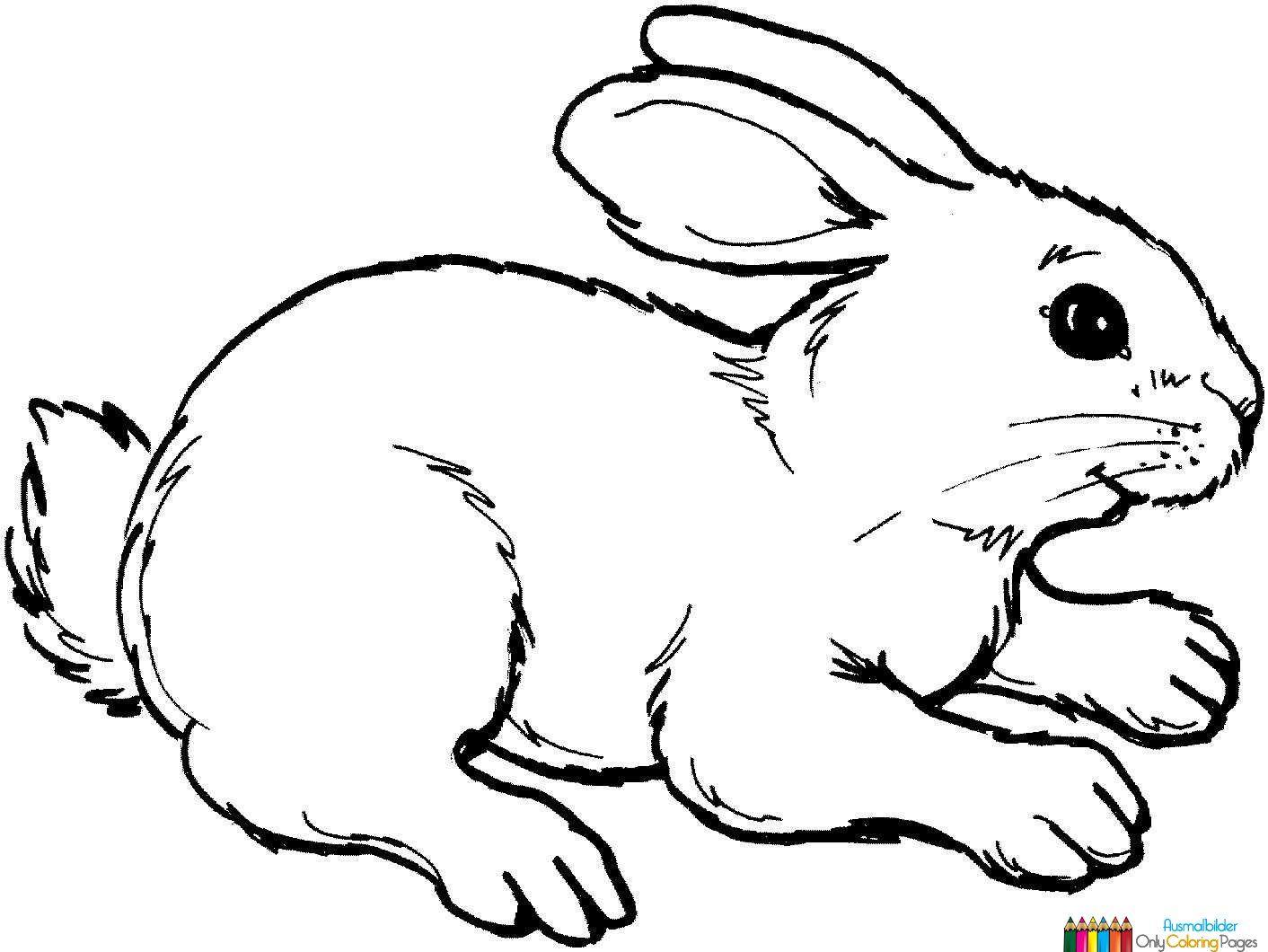 kaninchen zum ausmalen | Kinderzimmer | Pinterest ...