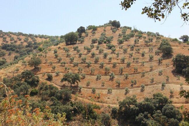Spain, Iznajar - hill side near Cortijo las Rosas