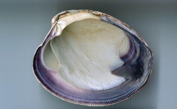 Massachusetts Shell Tote Wampum Quahog