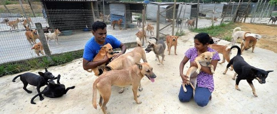 Singapore Spend 8000 A Month To House Strays In Jb