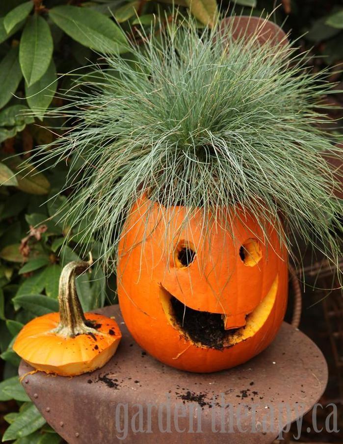 Jack o Planterns Halloween / fall Pinterest Halloween, Jack o