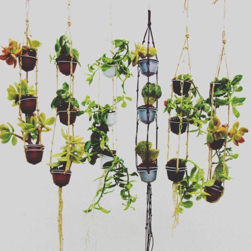 Mini jard n vertical con mini macetetos colgantes for Jardin vertical reciclado