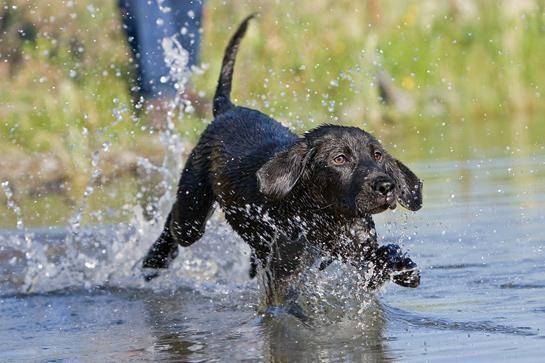 Pin On Dog Clicker Training