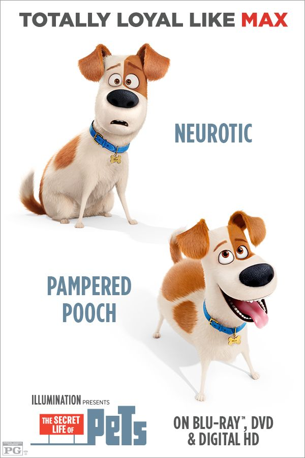 Which Pet Are You Most Like If You Re Like Max Show Your Friends Your Loyalty Own The Secret Life Of Pets On Blu R Dessin Anime Films Dessins Animes Animaux