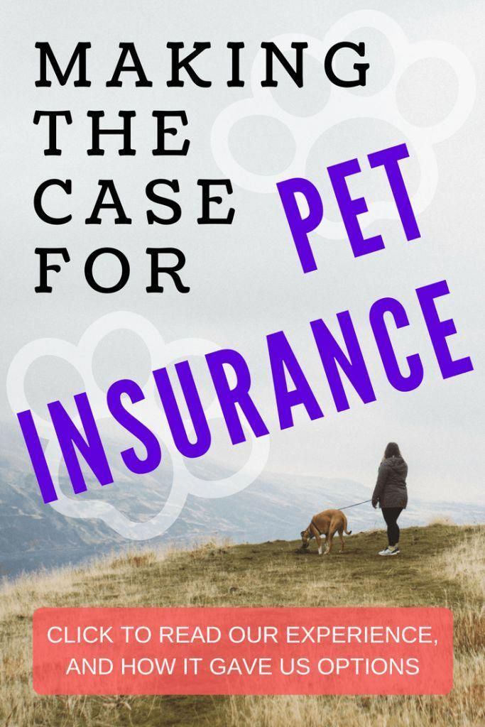 Making The Case For Pet Insurance In 2020 Pet Health Insurance Health Insurance Cat Insurance