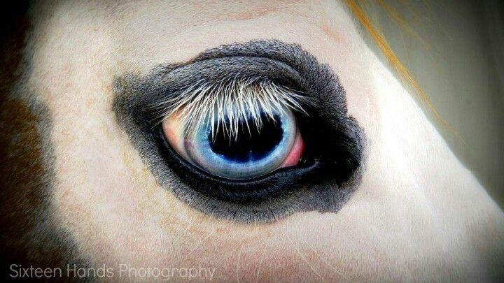 Blue eye with eyeliner
