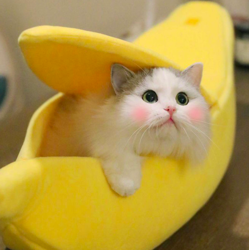 Banana Peel Cat Bed Baby animals funny, Cute cats, Cat bed