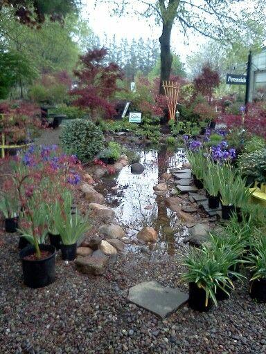 Retention Dry Pond I Built Behind My Office Modern Backyard Landscaping Backyard Landscaping Easy Backyard