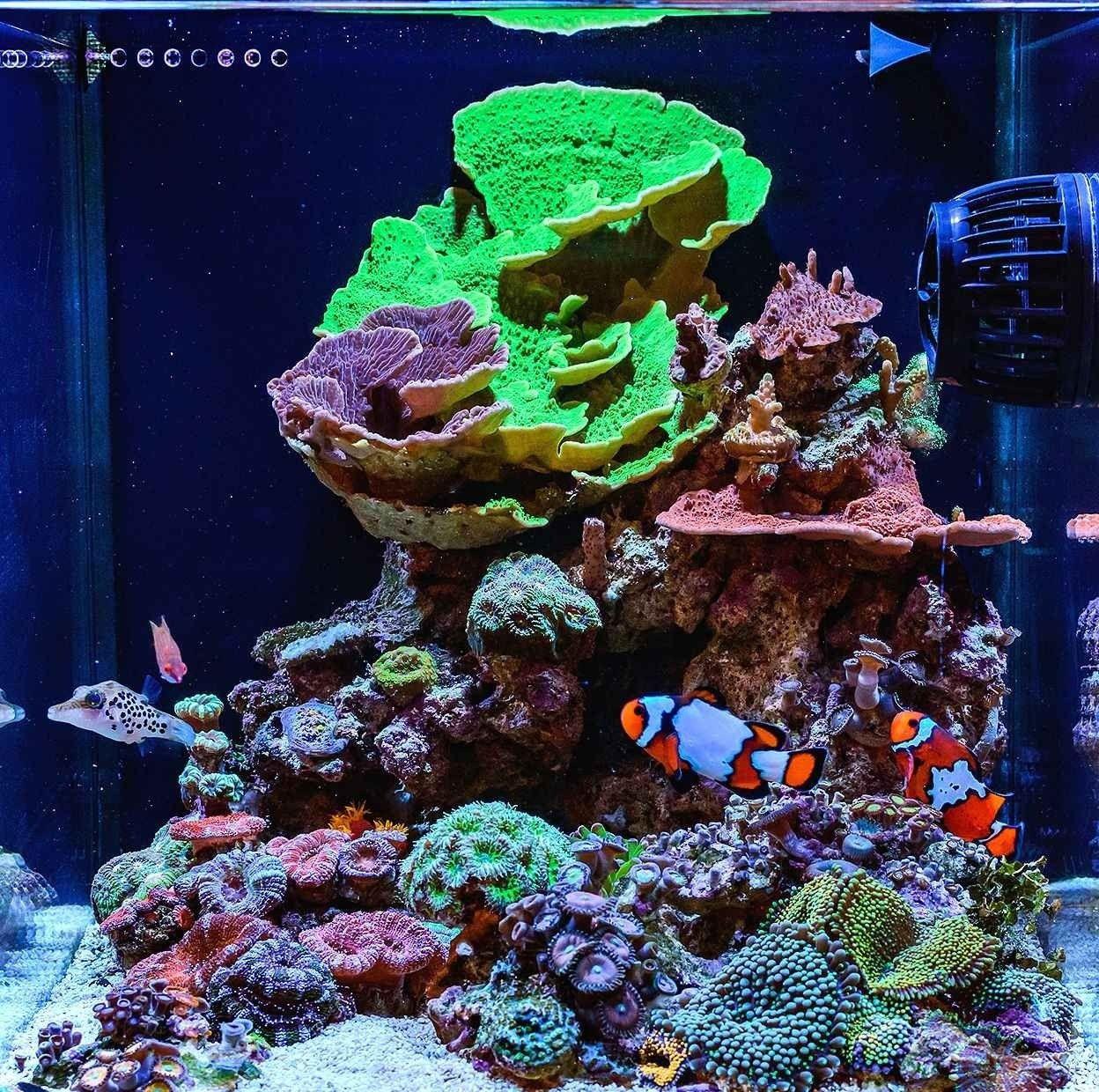 Relaxation Aquascaping Ideas For Inspiration In 2020 Saltwater Fish Tanks Reef Aquarium Saltwater Aquarium Fish